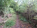 Bridleway leading to Rowbarns Manor - geograph.org.uk - 69089.jpg