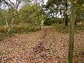 Bridleway near Sleaford - geograph.org.uk - 1576486.jpg