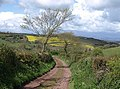 Bridleway to Lower Gabwell - geograph.org.uk - 788236.jpg