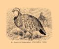Brockhaus and Efron Encyclopedic Dictionary b33 074-0- 4 - Caccabis rufa.png