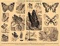 Brockhaus and Efron Encyclopedic Dictionary b4 610-1.jpg