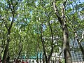 Bryant Park, New York City (May 2014) - 03.JPG