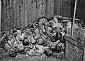 Buchenwald Ohrdruf Corpses 63512.jpg
