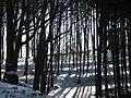 Buchenwald im Winter - panoramio.jpg