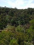 Budj Bim ‐ Mt Eccles National Park, Victoria, Australia 03.jpg
