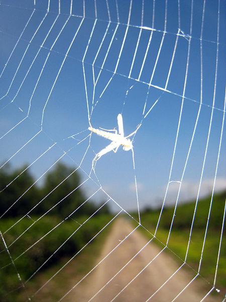 Muchas fotos de telas de arañas