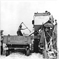 Bundesarchiv Bild 183-57175-0004, Kleinraschütz, Ernte, Ablassen des Korns.jpg