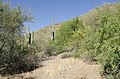 Butcher Jones Trail, Burro Cove and Beyond, Tonto National Park, Arizona - panoramio (32).jpg