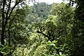 Bwindi Impenetrable National Park 12.jpg