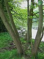 By the Lake, near Willey, Shropshire - geograph.org.uk - 457323.jpg
