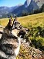 Byron du Rêve des loups bleus.jpg