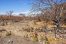 Caatinga – Wikipédia, a enciclopédia livre