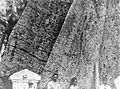 COLLECTIE TROPENMUSEUM Vergroting onderste deel van een reusachtige Randoe allasboom te Toeban TMnr 10006255.jpg