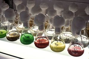 Microalgae - Collection of microalgae cultures, CSIRO