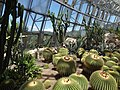 Cacti at beijing botanical garden.jpg