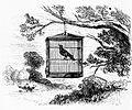 Caged Bird in Tree.jpg