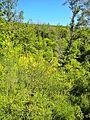 Cambiaticcio-paesaggio 16.jpg