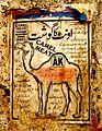 Camel meat (3943707174).jpg
