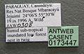 Camponotus sanctaefidei casent0173447 label 1.jpg
