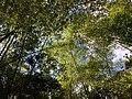 Canopy (45805610504).jpg