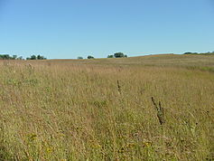 A rolling green and brown prairie, with a few trees in the background and a blue sky.