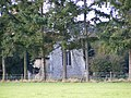 Carlton Church - geograph.org.uk - 1027959.jpg