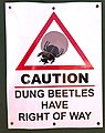 Caution Dung Beetles, South Africa.jpg