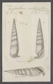 Cerithium vertagus - - Print - Iconographia Zoologica - Special Collections University of Amsterdam - UBAINV0274 083 05 0018.tif