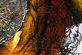 ChDiam-teia-água-2014-05-03-1031.jpg