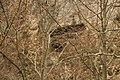 Cheile Vârghișului - Varghis Gorges - panoramio (20).jpg