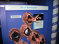 Chicago Illinois - Be a Barnacle - Field Museum.jpg