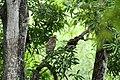 Chinnar Wildlife Sanctuary IMG 9072 (33).JPG