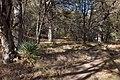 Chiricahua Mountains, Cave Creek Trail below Sunny Flat - Flickr - aspidoscelis (1).jpg