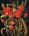 Christian Juel Mollback - Cactus with Scarlet Blossoms (14150454551).jpg