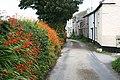 Chywoone Grove - geograph.org.uk - 927825.jpg