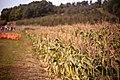Cider Hill Farm, Amesbury, United States (Unsplash bvCyyKT-SDE).jpg