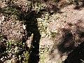 Circuit de randonnee autour de Pierre Buffiere, Excavations Gallo-Romaine - panoramio (1).jpg