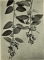 Climbing plants (1915) (20663597051).jpg