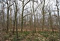 Clowes Wood off Hackington Rd - geograph.org.uk - 1208095.jpg