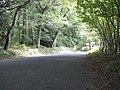 Coldwaltham, Waltham Park Road - geograph.org.uk - 1496649.jpg