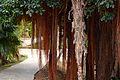 Colección Palmetum de Santa Cruz de Tenerife 12.JPG
