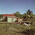 Collectie Nationaal Museum van Wereldculturen TM-20017502 Vervallen woning bij Koolbaai Sint Maarten Boy Lawson (Fotograaf).jpg