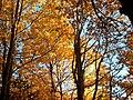 Colori dell'autunno SILA - panoramio.jpg