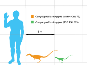 Compsognathidae - Comparison of German (green) and French (orange) Compsognathus longipes specimen