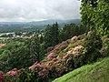 Conca dei Rododendri a maggio (1) - Burcina.jpg