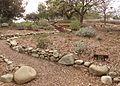 Conejo valley botanical gardens salvia garden.jpg