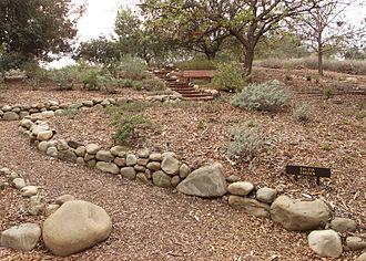 Conejo Valley Botanic Garden - Salvia Garden.