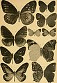"""Correspondenz-blatt des Entomologischen Vereins """"Iris"""" zu Dresden (1884) (20513537579).jpg"""