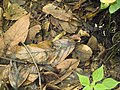 Costa Rica (6110539170).jpg
