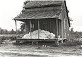 Cotton on porch of sharecropper's home, Maria plantation, Ar... (3109755973).jpg